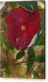 Red Hibiscus Acrylic Print by Bonnie Bruno