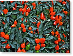 Red Hots Acrylic Print by Mary Machare