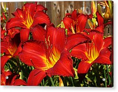 Red Hots Return Acrylic Print by Bruce Bley