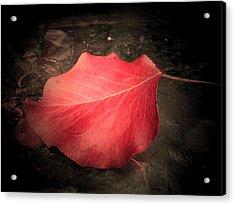 Red Leaf  Acrylic Print by Beth Akerman