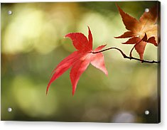 Acrylic Print featuring the photograph Red Leaf. by Clare Bambers