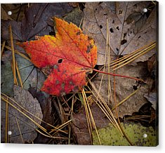 Red Leaf Acrylic Print
