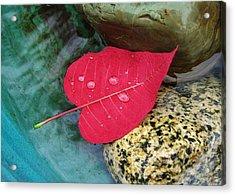 Red Leaf Love Acrylic Print