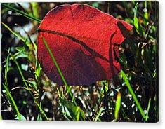 Red Leaf On Green Acrylic Print