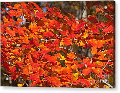 Red Leaves Acrylic Print by Charles  Ridgway
