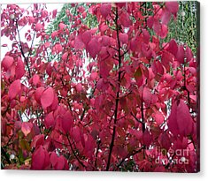 Red Leaves I Acrylic Print by Alys Caviness-Gober