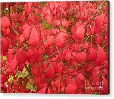 Red Leaves Iv Acrylic Print by Alys Caviness-Gober
