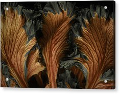 Red Lettuce Acrylic Print