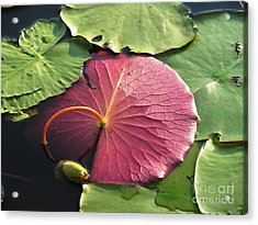 Red Lily Pad Acrylic Print