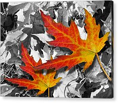 Red Maple Leaves Acrylic Print by Mariola Szeliga