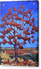 Red Maple Acrylic Print by Lisa Masters