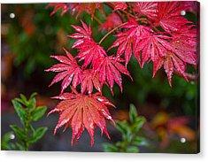 Red Maple Season Acrylic Print by Ken Stanback