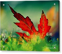 Red Oak Leaf Acrylic Print