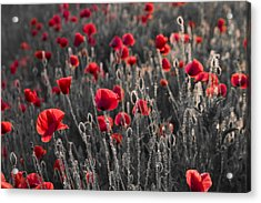 Red Acrylic Print by Octavian Chende