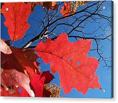 Red On Blue Acrylic Print