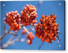 Red Orange Blue Acrylic Print