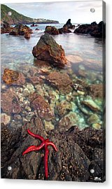 Red Pepper Acrylic Print by Rui Silveira