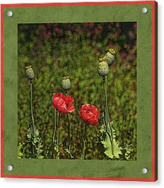 Red Poppies Acrylic Print by Bonnie Bruno