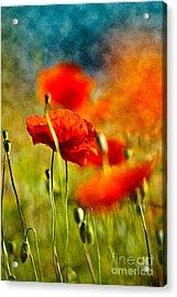 Red Poppy Flowers 01 Acrylic Print