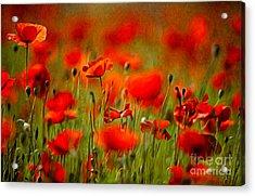 Red Poppy Flowers 02 Acrylic Print