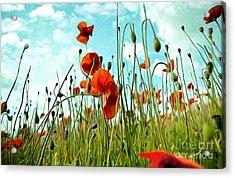 Red Poppy Flowers 03 Acrylic Print