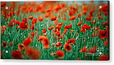Red Poppy Flowers 04 Acrylic Print