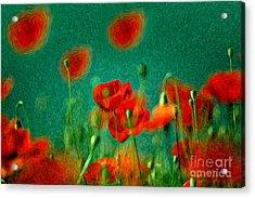 Red Poppy Flowers 07 Acrylic Print