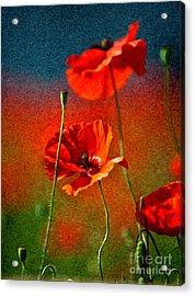 Red Poppy Flowers 08 Acrylic Print