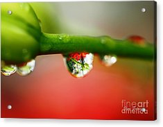 Acrylic Print featuring the photograph Red Raindrops by Yumi Johnson