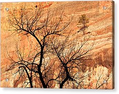 Red Rocks And Trees Acrylic Print by Adam Pender