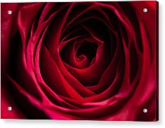 Acrylic Print featuring the photograph Red Rose by Matt Malloy