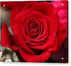Red Rose Of Love II Acrylic Print by Sheila Kay McIntyre