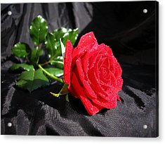 Red Rose On Black Acrylic Print