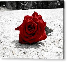 Red Rose On The Road Acrylic Print by Sumit Mehndiratta