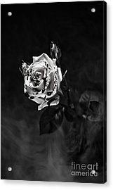 Red Rose Acrylic Print by Randall  Cogle