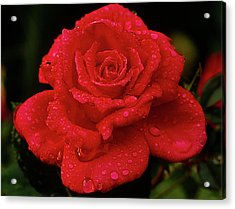 Red Rose With Rain Acrylic Print