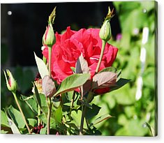 Red Roses Acrylic Print by LaDonna Vinson