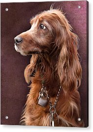 Acrylic Print featuring the photograph Red Setter Dog Portrait by Ethiriel  Photography