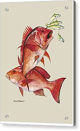 Red Snapper Acrylic Print by Kevin Brant