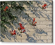 Acrylic Print featuring the photograph Red Summer Trumpets by Deborah Smith
