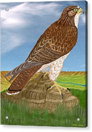Acrylic Print featuring the digital art Red Tail Hawk by Walter Colvin