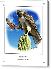 Red Tailed Hawk Acrylic Print by Owen Bell