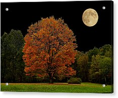 Acrylic Print featuring the photograph Red Tree by Brian Hughes