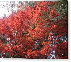 Red Tree Acrylic Print by Naxart Studio