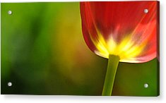 Acrylic Print featuring the photograph Red Tulip 2 by Ronda Broatch