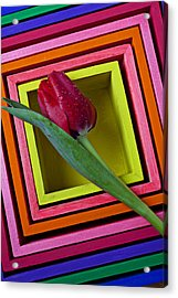 Red Tulip In Box Acrylic Print by Garry Gay