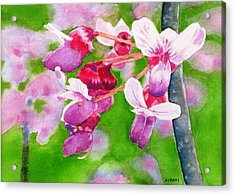 Redbud Acrylic Print by Debra Spinks