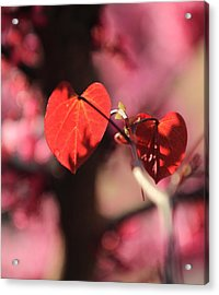 Acrylic Print featuring the photograph Redbud In Spring by Scott Rackers