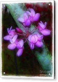 Redbud Acrylic Print by Judi Bagwell