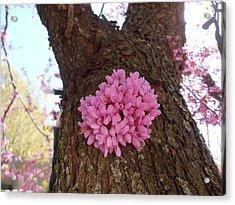 Redbud Tree Two Thousand Twelve Acrylic Print
